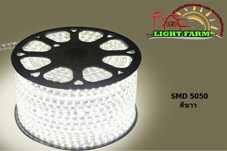 ไฟสายยาง SMD 5050 (50 m.) สีขาว (ท่อแบน)