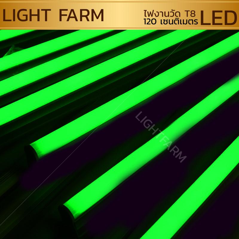 หลอดไฟงานวัด LED (ไฟนิ่งไม่กระพริบ) สีเขียว / หลอดไฟ T8 หลอดสี