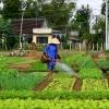 ทำไมต้องเกษตรอินทรีย์