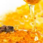น้ำผึ้งป่าภูเขา