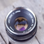 CANON LENS FD 50MM. F1.8 FD MOUNT SILVER NOSE