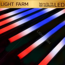 หลอดไฟงานวัด LED (ไฟนิ่งไม่กระพริบ) สีธงชาติ / หลอดไฟ T8 หลอดสี