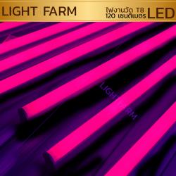 หลอดไฟงานวัด LED (ไฟนิ่งไม่กระพริบ) สีชมพู / หลอดไฟ T8 หลอดสี