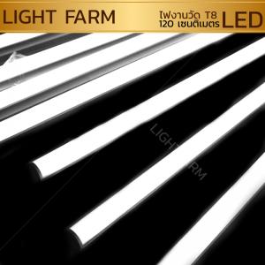 หลอดไฟงานวัด LED (ไฟนิ่งไม่กระพริบ) สีขาว / หลอดไฟ T8 หลอดสี