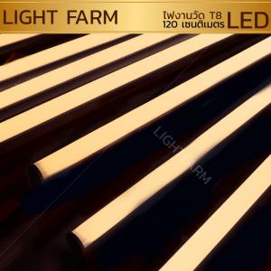 หลอดไฟงานวัด LED (ไฟนิ่งไม่กระพริบ) สีรวม / หลอดไฟ T8 หลอดสี