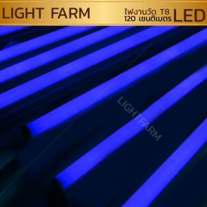 หลอดไฟงานวัด LED (ไฟนิ่งไม่กระพริบ) สีฟ้า / หลอดไฟ T8 หลอดสี
