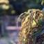 CANON LENS FL 50MM. F1.8 thumbnail 9