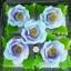 พิมพ์ยางซิลิโคน 3D ลาย ดอกกุหลาบตูม thumbnail 2