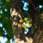 INDUSTAR-26M 50MM.F2.8 M39 MOUNT thumbnail 15