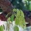 CANON FD LENS 200MM.F4S.S.C FD MOUNT thumbnail 8