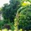 INDUSTAR-26M 50MM.F2.8 M39 MOUNT thumbnail 11