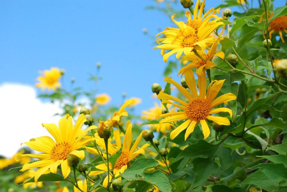 ดอกไม้ประจำจังหวัดแม่ฮ่องสอน