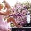 พร้อมส่ง น้ำหอม Estee Lauder Pleasures for Women EDP 100 ml. thumbnail 2